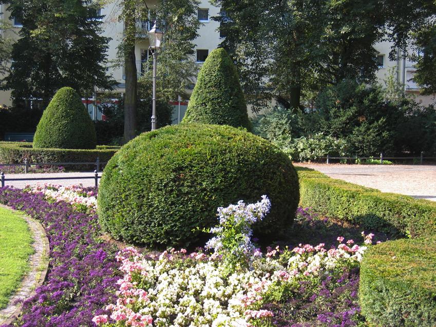 Przycinanie ro lin strzy enie formowanie wycinanie for Arboles de jardin fotos